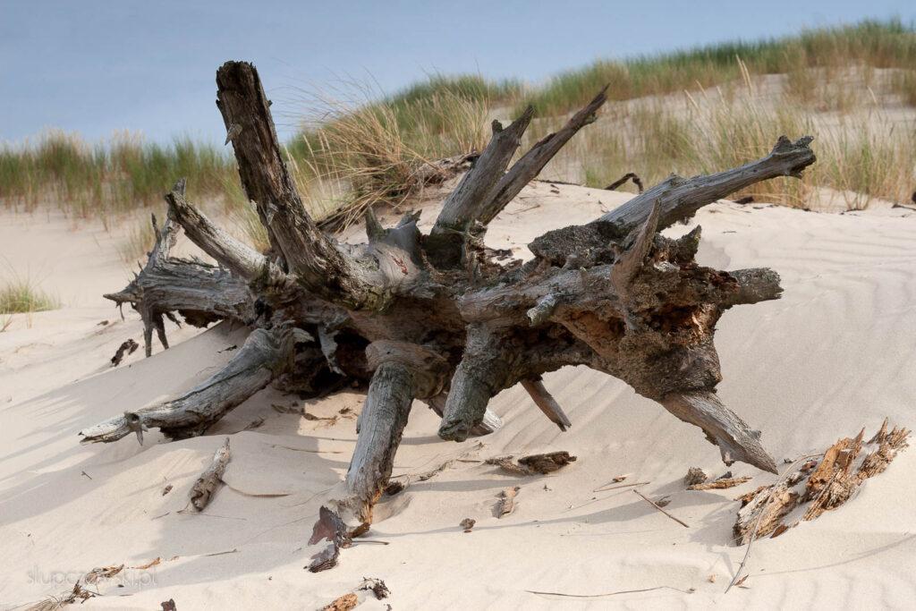 Słowiński park Narodowy wydmy